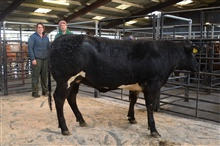 31/01/2020 - Store Cattle Show & Sale